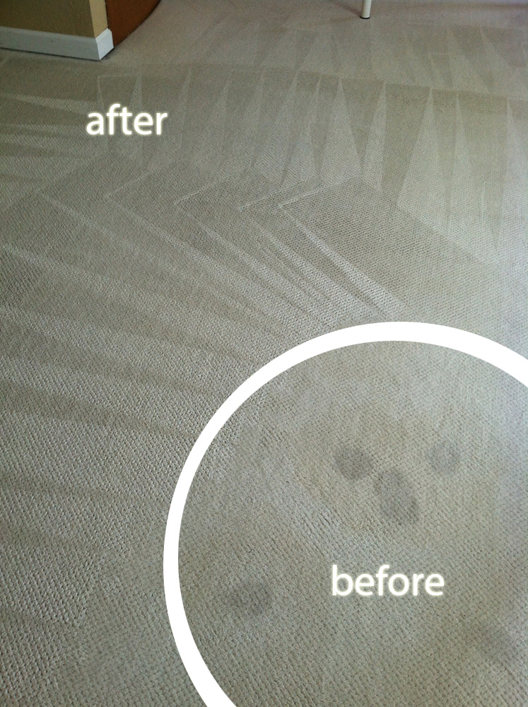 Carpet Cleaning Saratoga Carpet Cleaning 408 275 2800