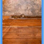 Wall-Mold-Removal-Saratoga